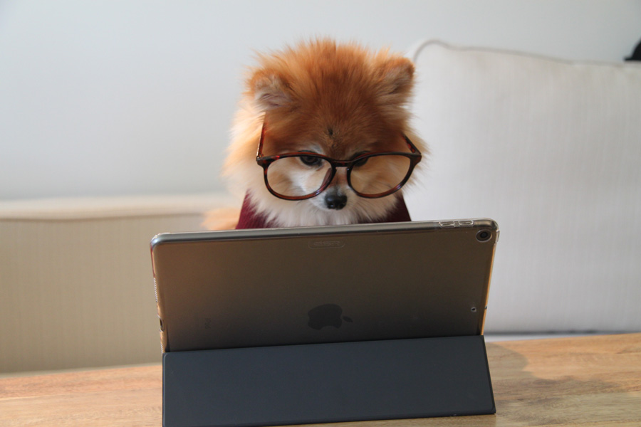 pomeranian on ipad, positive customer reviews