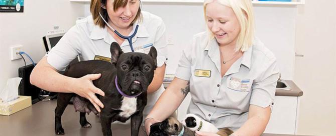 vets in a veterinary practice