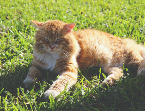 Heatstroke in cats: what you need to know