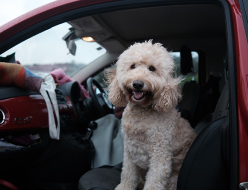 Travelling with pets: the rules and regulations