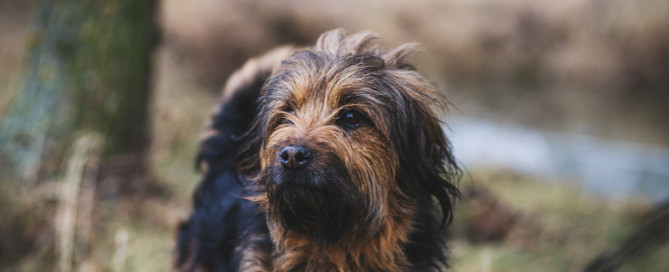 scruffy dog, imposter syndrome