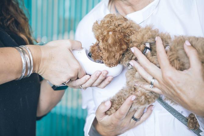 vet feeding small dog, imposter syndrome