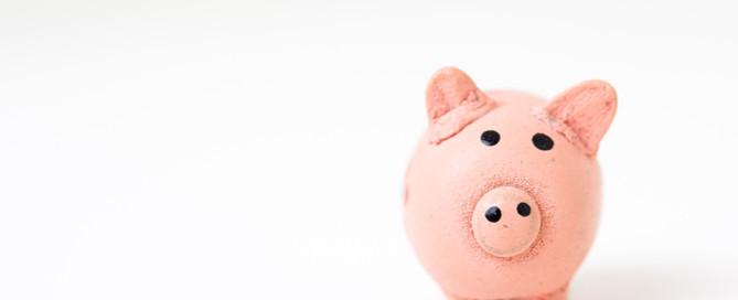 piggy bank, pet business news