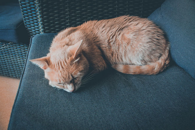 cat asleep on sofa, signs a cat is sick