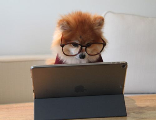 Creating a blog for your pet business