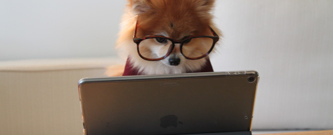 pomeranian at laptop, set up a blog for your pet business
