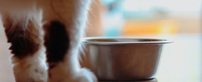 cat bowl, cat health, cat feeding