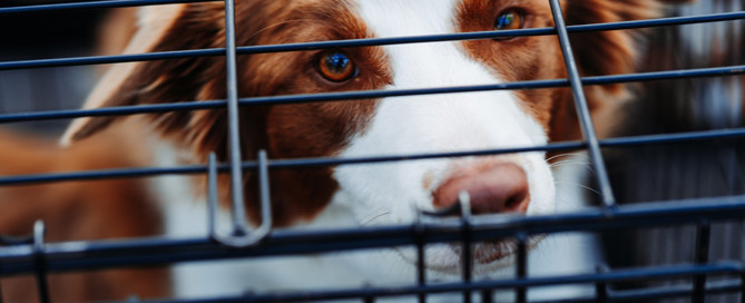 dog in cage, boarding kennel insurance