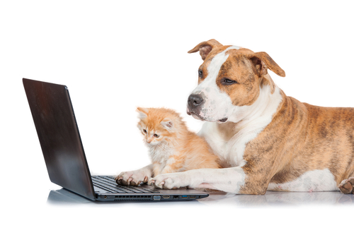Checking insurance quote online