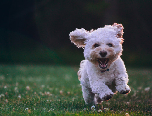 Building resilience in dogs: why it matters