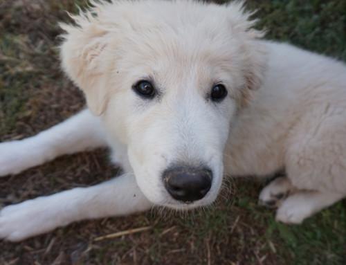 Pet welfare: Animal hoarding