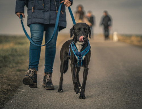 6 challenges of running a dog walking business