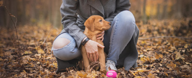 woman with dog outdoors, pet sitting