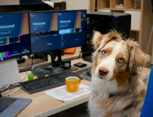Take Your Dog To Work: 10 tips for success