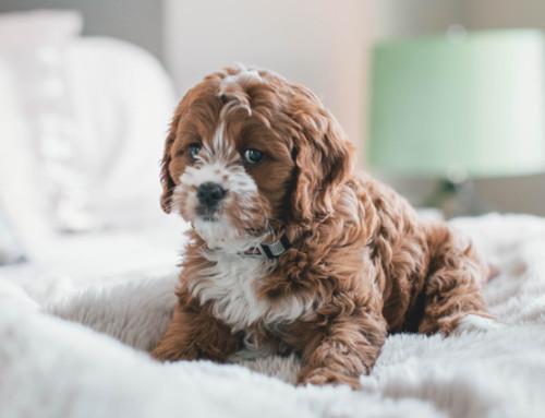 6 common dog health problems