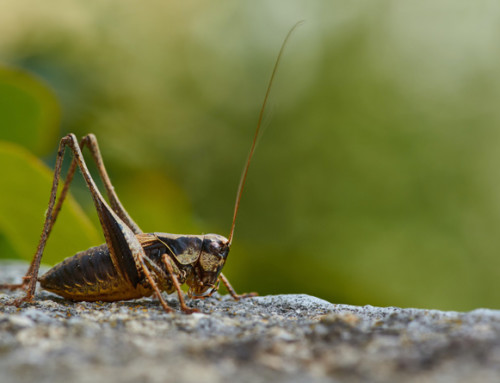 What's the go with insect protein for pets?